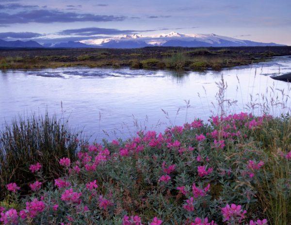 Iceland skaftafell eyrarros