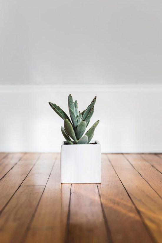 wooden floor plant