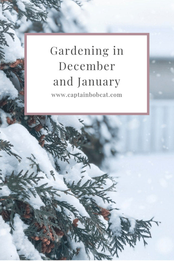 Gardening in December and January
