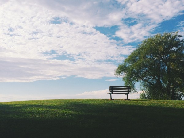tree and bench: Eco-Friendly Memorial Options