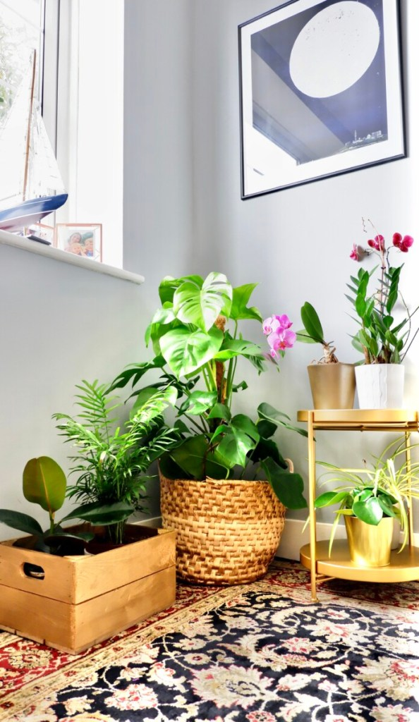 plant corner: upcycling projects