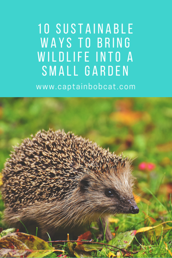 10 Sustainable Ways to Bring Wildlife into a Small Garden