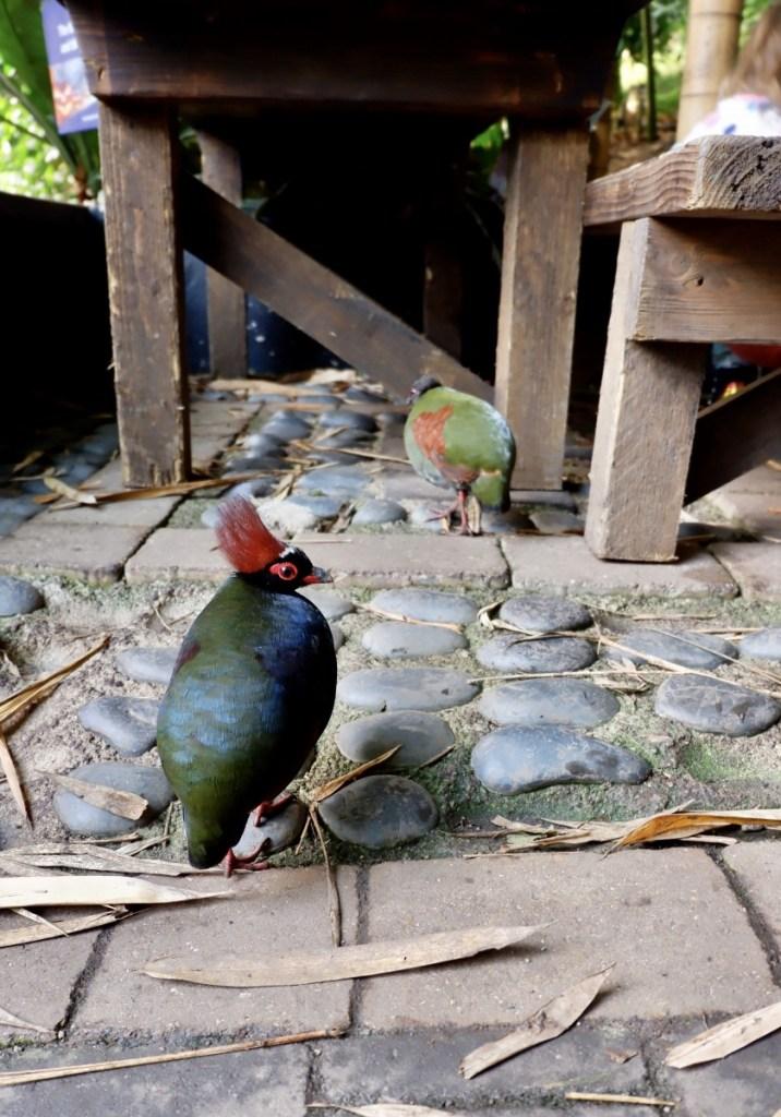 roul-roul partridge