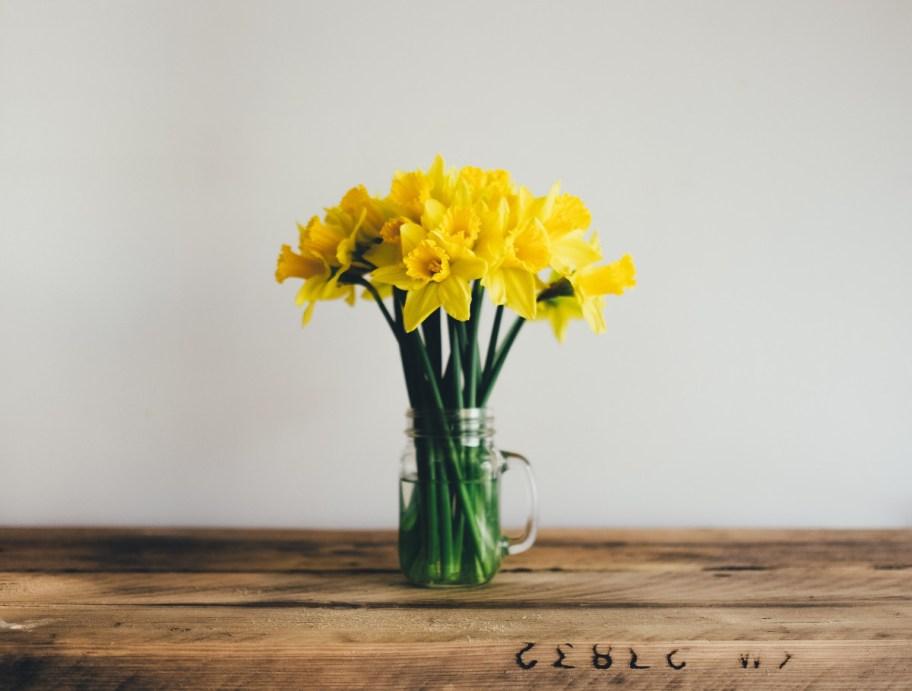spring flowers daffodil