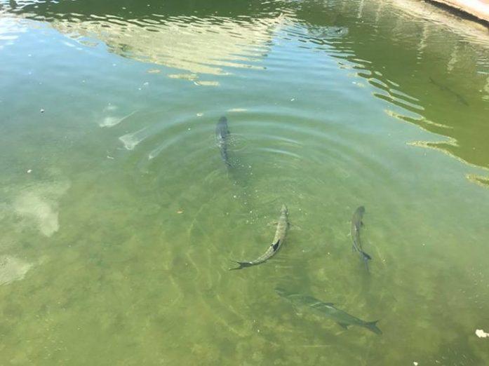 Florida keys fishing charters captain doug kelley for Plenty of fish reviews 2017