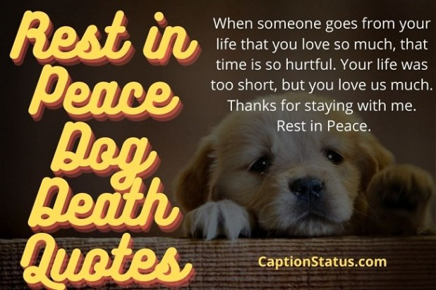 Rest in Peace Dog Death Quotes
