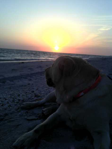 Hank, May 3, Photo From 2011, Sunset On Captiva, Sanibel & Captiva Islands & Fort Myers Charters & Fishing Guide Service.