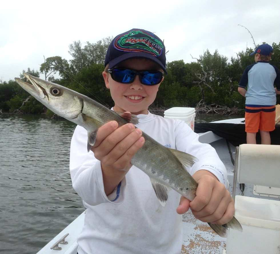 Barracuda, Captiva, Chadwick's Bayou, 12-30-12, Sanibel & Captiva Islands & Fort Myers Charters & Fishing Guide Service.