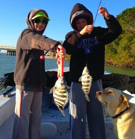 Two Sheepshead caught in Blind Pass, Sanibel & Captiva Islands & Fort Myers Charters & Fishing Guide Service.