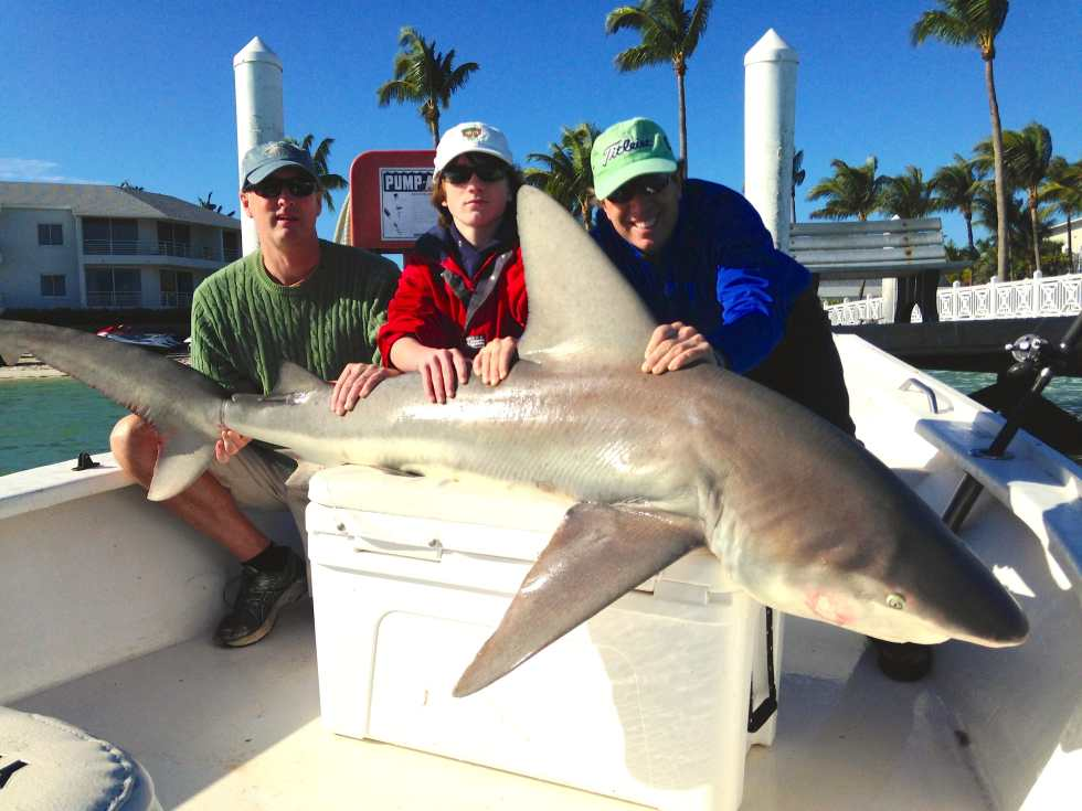 Big Bull Shark caught inshore of Captiva, Sanibel & Captiva Islands & Fort Myers Charters & Fishing Guide Service.