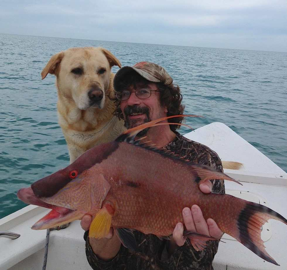 Hogfish, 7-26-14, Sanibel & Captiva Islands & Fort Myers Charters & Fishing Guide Service.