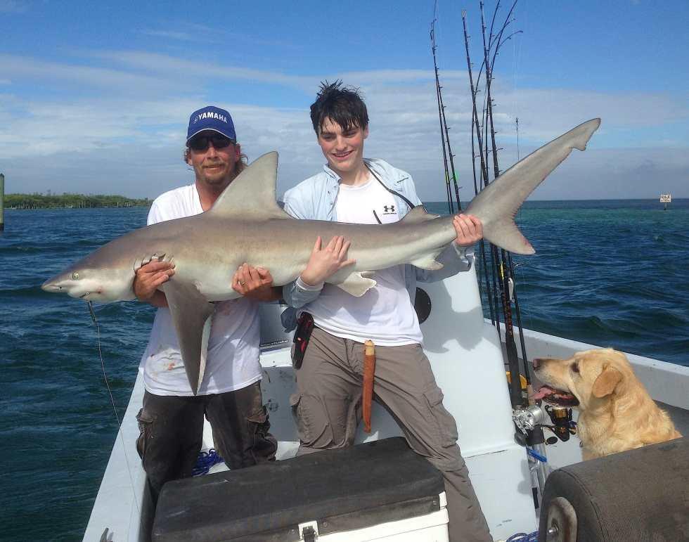 Sandbar Shark, 1-19-14, Redfish Pass, North Captiva, Sanibel & Captiva Islands & Fort Myers Charters & Fishing Guide Service.
