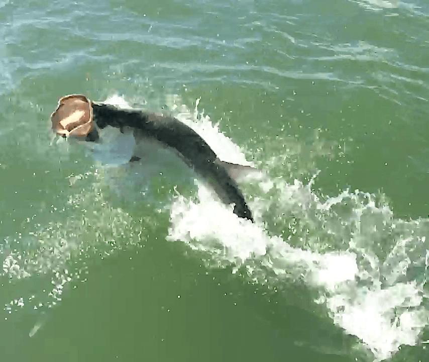 Tarpon Jumping, Sanibel Fishing & Captiva Fishing, Sanibel Island, Saturday, June 24, 2017. File Photo.