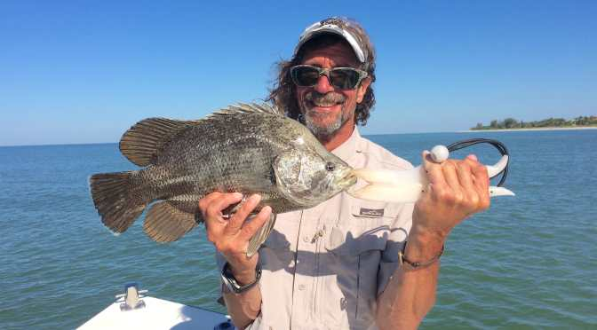 Captiva Fishing, Wednesday, May 25, 2016, Tripletail!