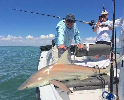 Big Blacktip Shark, Sanibel Fishing & Captiva Fishing, Thursday, June 2, 2016.