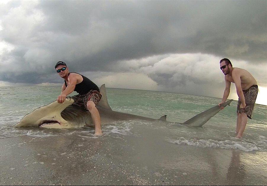 Hammerhead Shark, Sanibel Beach, Catch & Release, Courtesy Of Cullem Scott Guthrie, Sanibel Fishing & Captiva Fishing, Tuesday, August 2, 2016.