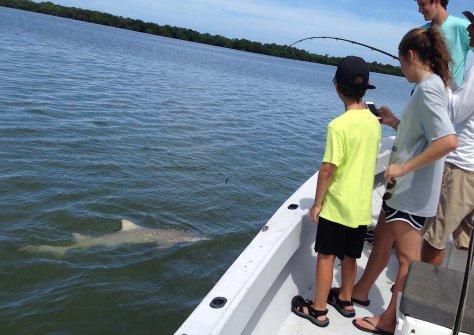 Lemon Shark, Catch & Release, Sanibel Fishing & Captiva Fishing, Sanibel Island, Saturday, October 28, 2017.