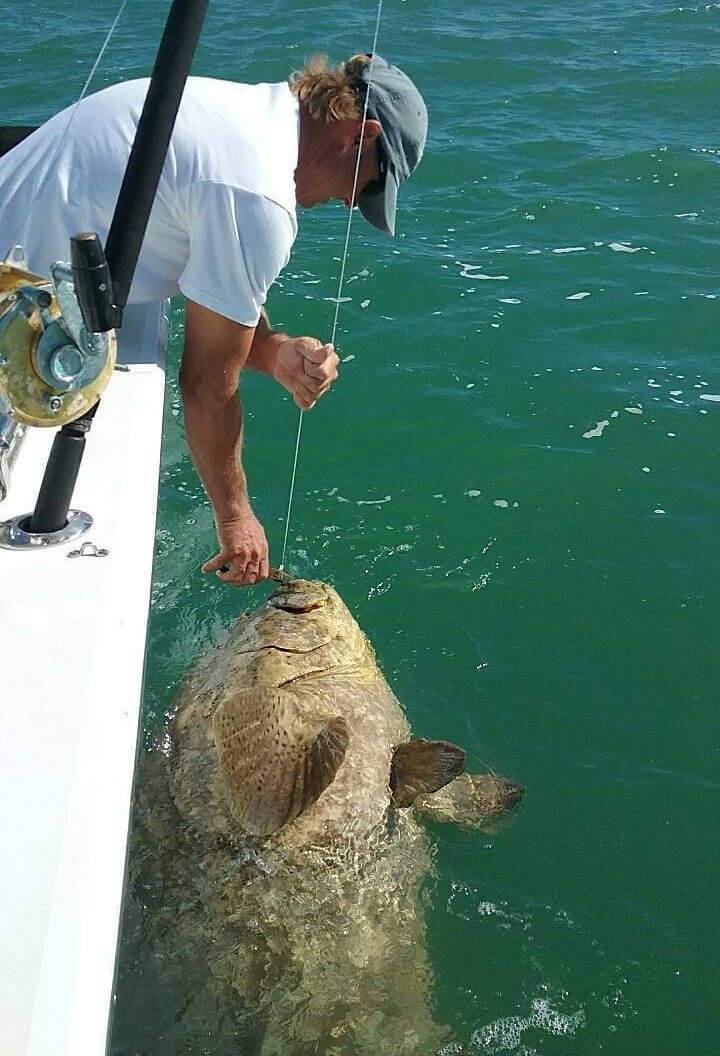 Goliath Grouper, Jimmy Burnsed, Catch & Release, Sanibel Fishing & Captiva Fishing, Sanibel Island, Thursday, November 2, 2017.