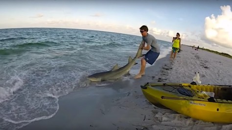 Lemon Shark, Kayak Fishing On The Beach, Catch & Release, Sanibel Fishing & Captiva Fishing, Sanibel Island, Friday, November 3, 2017. [File Photo - Jacob Spencer, Fall, 2016]