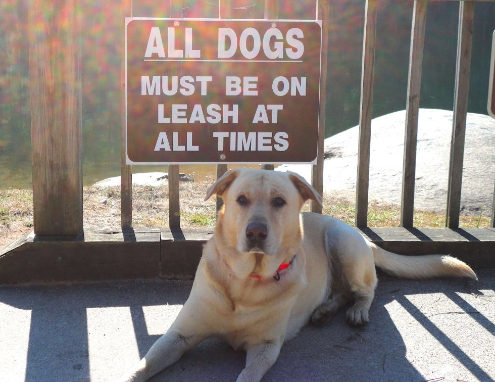 Hank, Rebel With A Cause, All Dogs Must Be On Leash!
