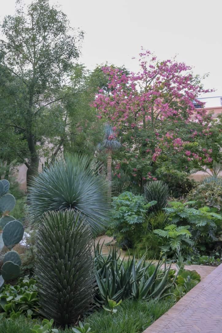 Plants in Le Jardin Secret in Marrakech