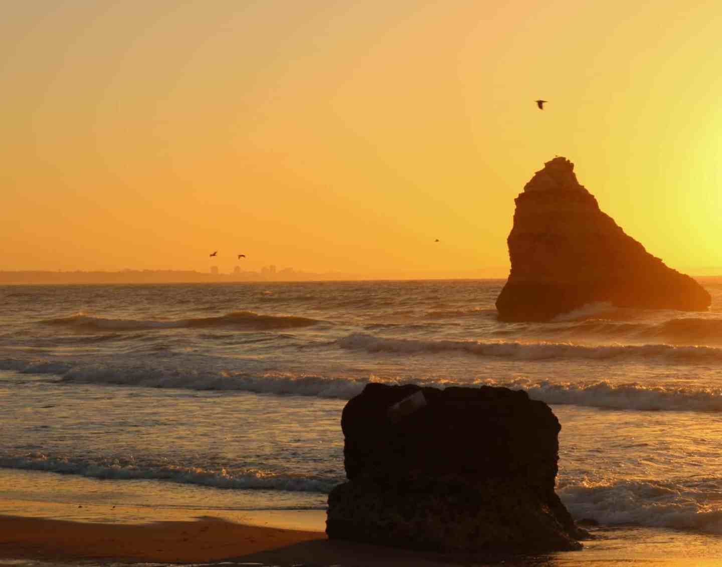 Sunrise at Algarve beach with rocks and a bird in the sky