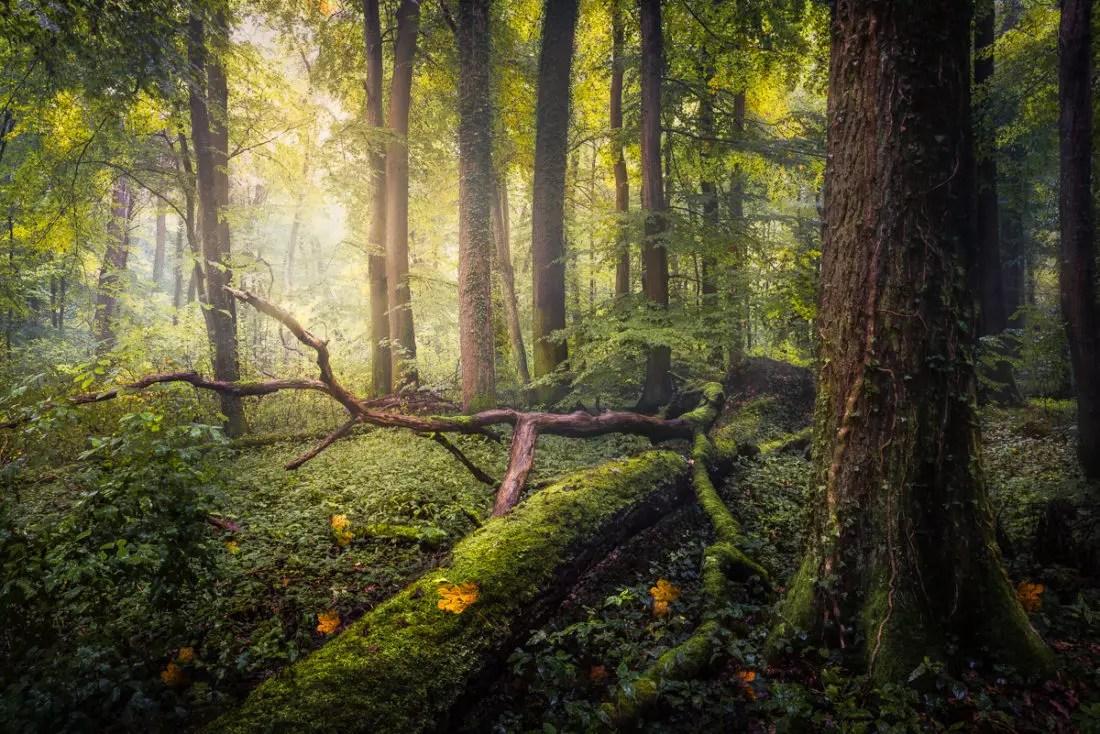 how to photograph forests