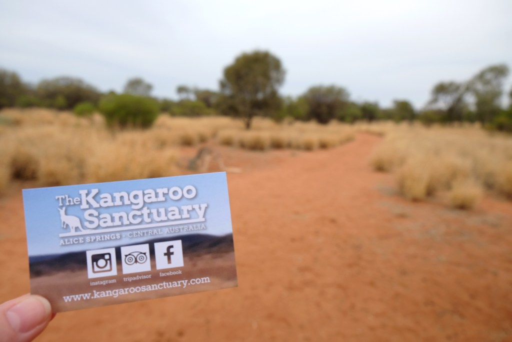sanctuaire kangourous alice springs