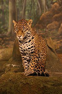 jaguar.fr