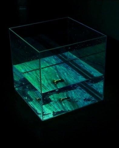 2009_Trapped-3_filmstills-Boy-in-Water_05