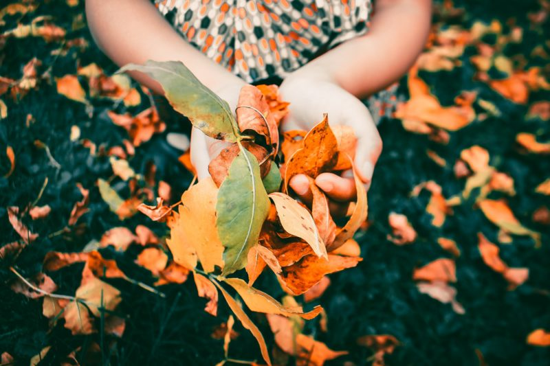 person holding fall leaves