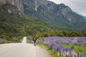 Chili - Carretera Austral - Lupins et Stephan