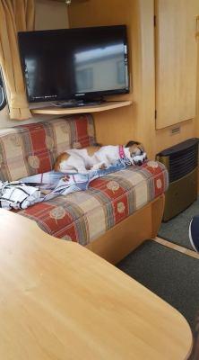 Dog in caravan