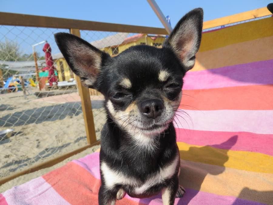 Spiaggia per cani a Riccione