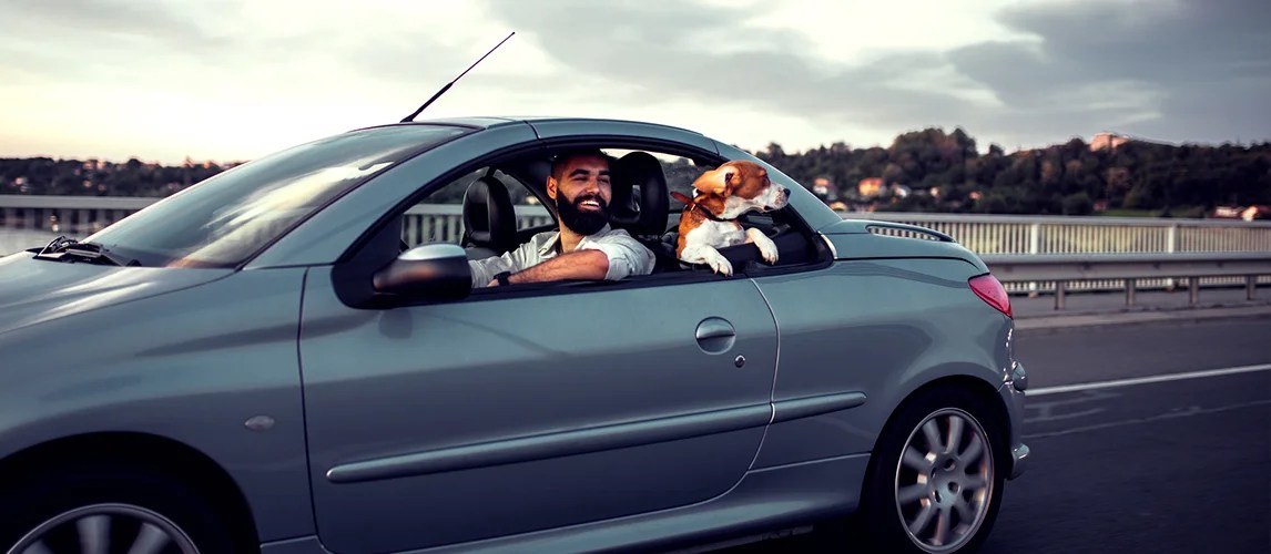 The Best Cars For Dog Owners To Buy Car Bibles