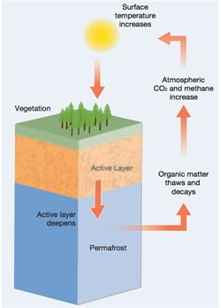 Q&A: What is permafrost? | Carbon Brief