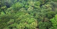 New paper raises question of tropical forest carbon ...
