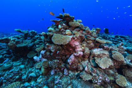 coral reef at the Palmerston Atoll