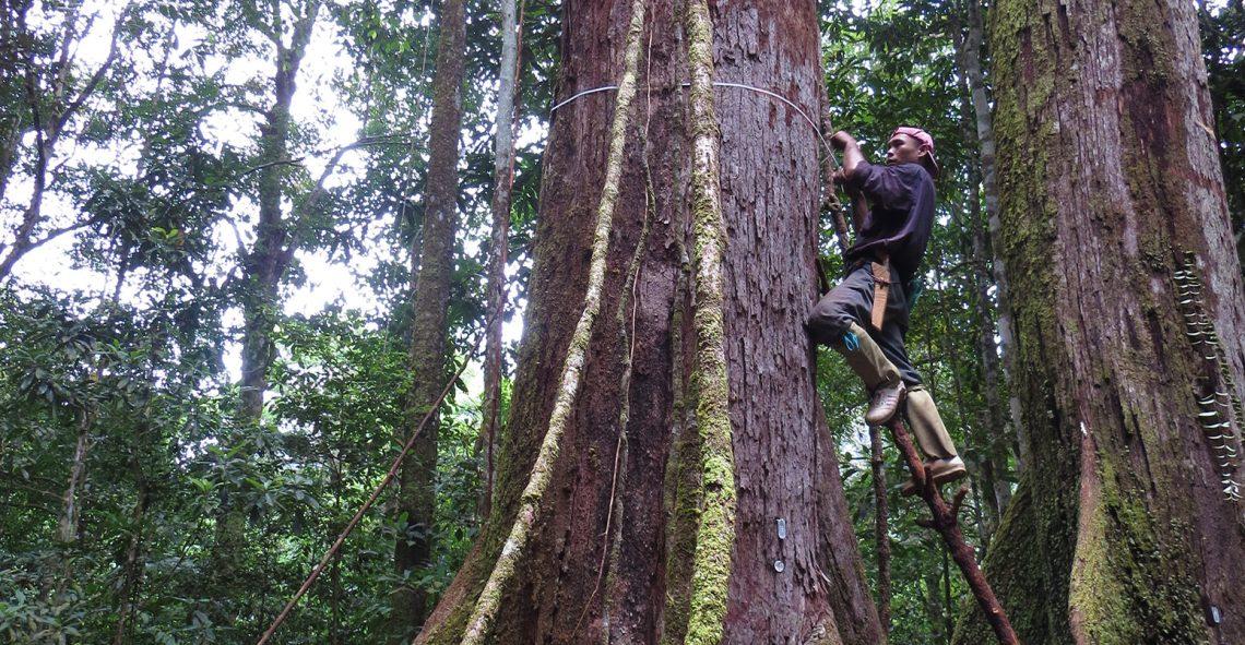16 Bit Forest Home - Measuring-trees_Credit-Lan-Qie-1550x804_Good 16 Bit Forest Home - Measuring-trees_Credit-Lan-Qie-1550x804  HD_913133.jpg