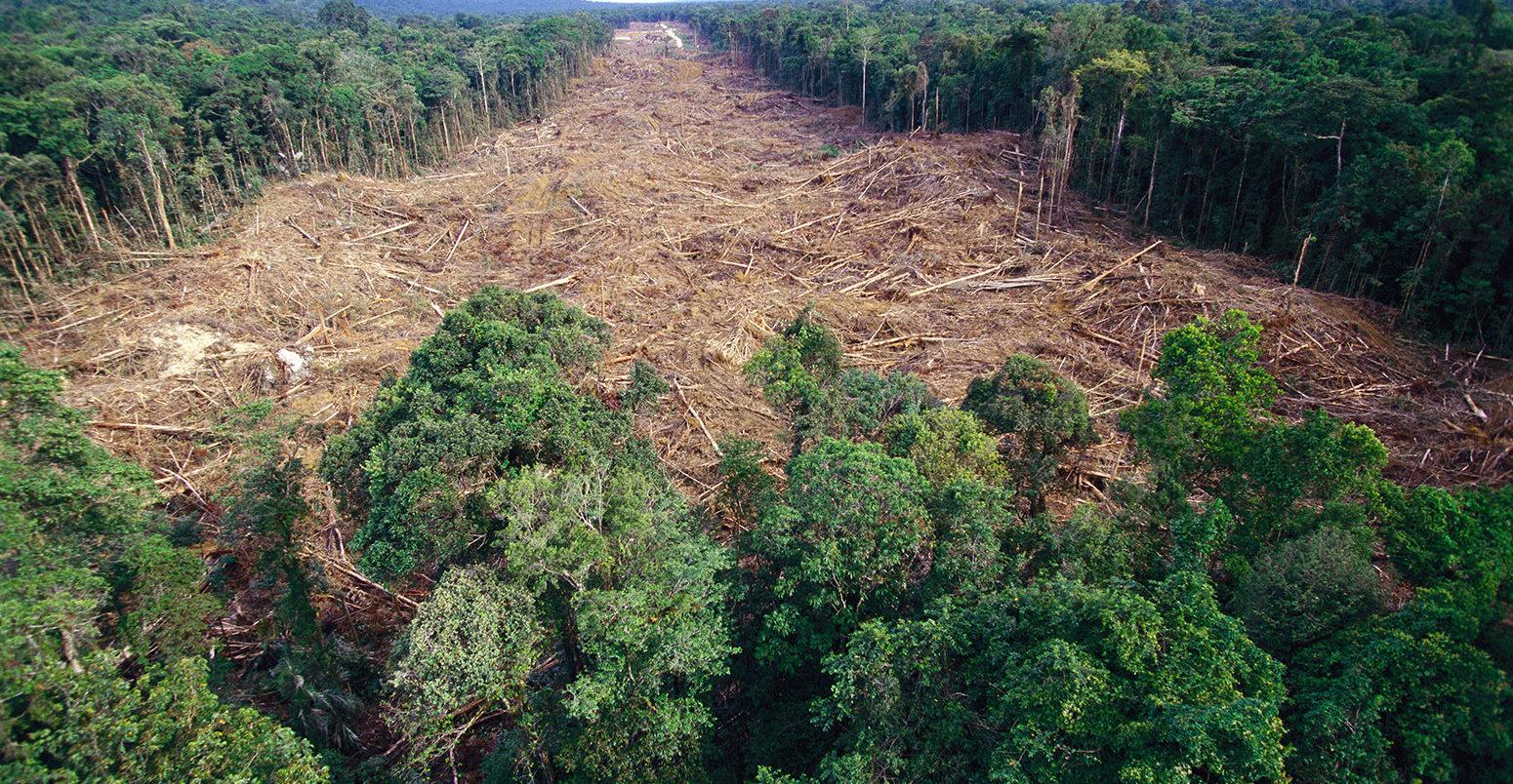 amazon rainforest layers diagram 2002 pt cruiser radio wiring deforestation has driven up hottest day temperatures