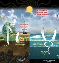 carbon cycle diagram [ 1080 x 911 Pixel ]
