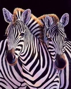 Zebras and carcinoid cancer awareness