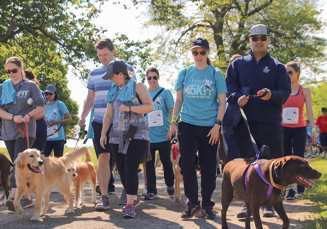 PAWS Volunteer Carousel 6