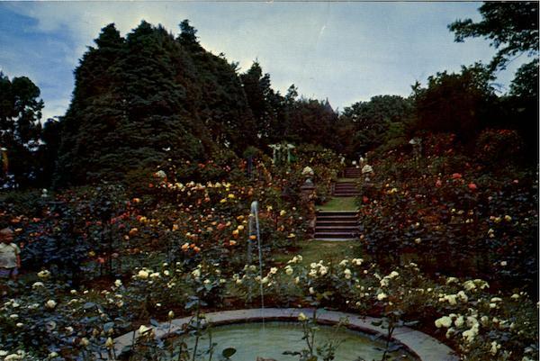 Webster Rose Gardens Woods Hole MA
