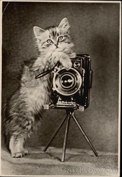 Fluffy Kitten Holding a Camera Cats