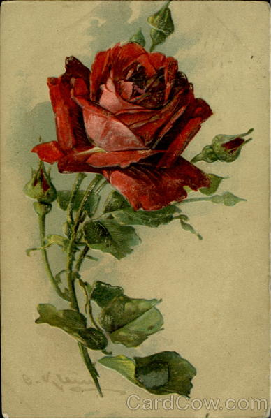 Divided We Fall Wallpaper Red Rose C Klein