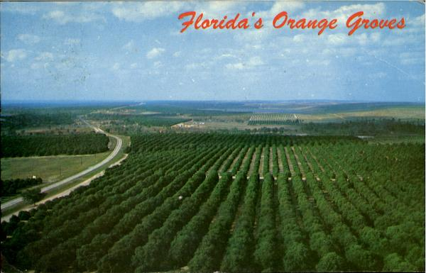 Floridas Orange Groves Citrus Tower FL