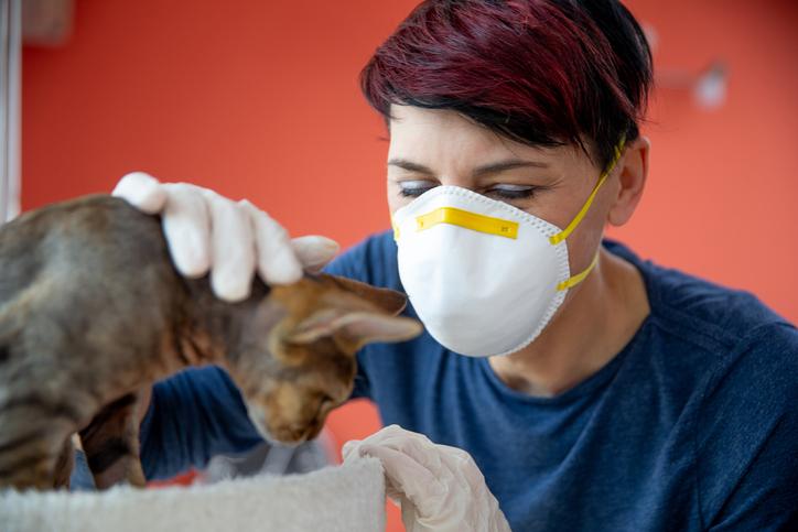 Veterinary Reputation Management Agency