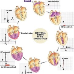 12 Lead Ekg Placement Diagram Home Theater Wiring The Ecg Explained Easy - Cardio Research Web Project