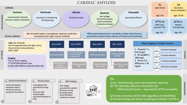 Cardiac Amyloid by Carine Hamo, MD
